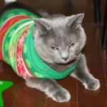 Cover cat ugly Christmas sweater